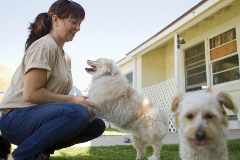 Erschwingliche Haustierpflege